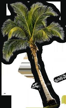 Hawaii Cinco Cero